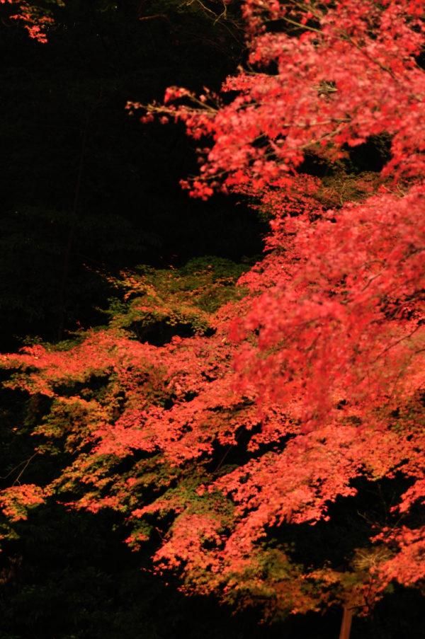 七五三の風景 紅葉
