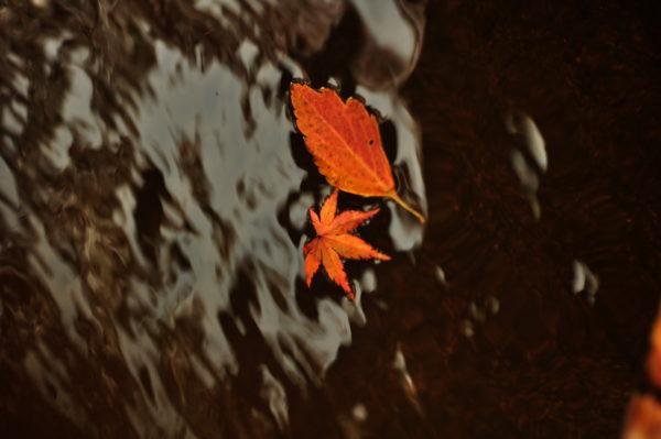 七五三の風景 落ち葉